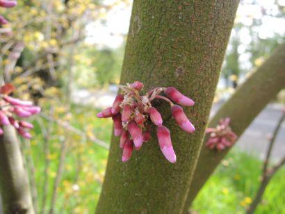 Fleur sur un tronc