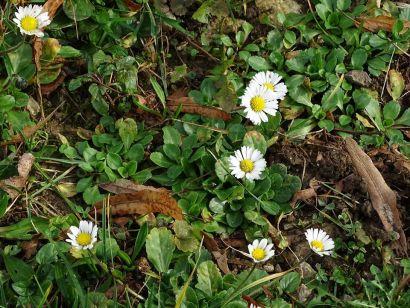 inventaire-fac_fleurs-de-printemps