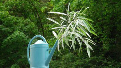 Une plante dans un arrosoir