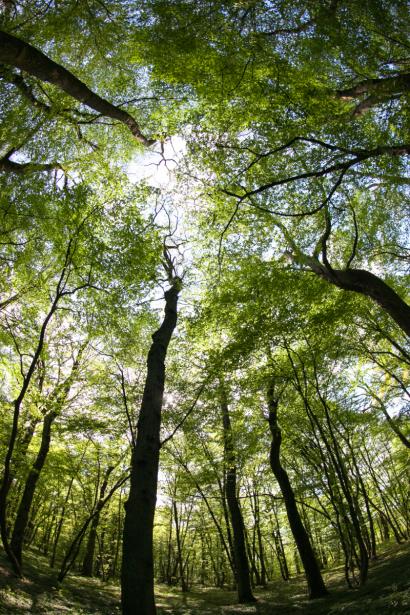 Photo d'arbres en contre-plongée dans une forêt