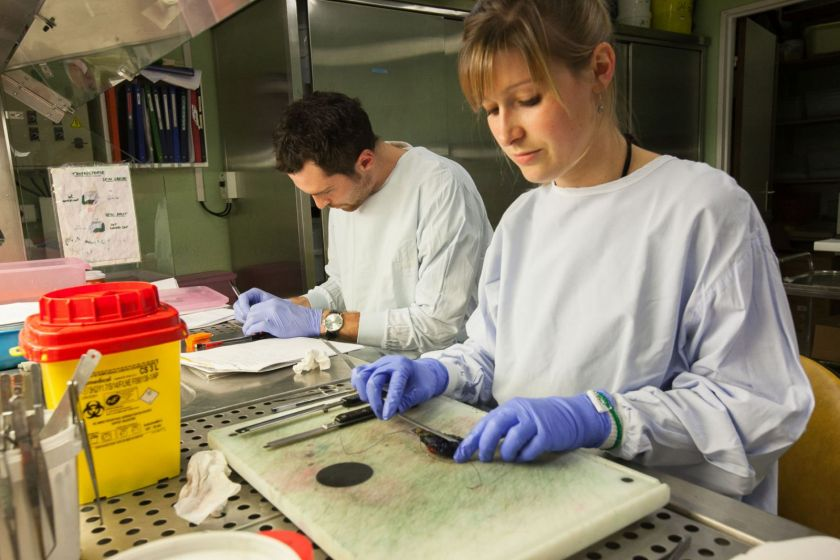 Une femme en blouse et gants en train de mesurer un prélèvements. Un homme équipé de la même façon en arrière-plan.