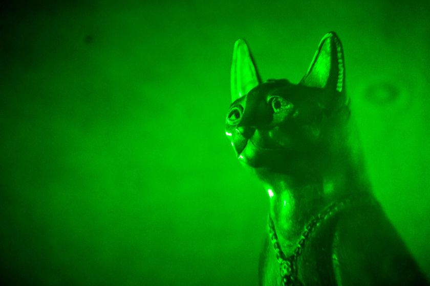 hologramme d'une statue égyptienne à l'effigie d'un chat.
