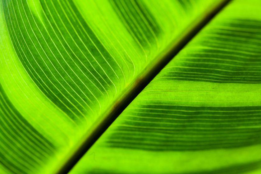 Gros plan sur une feuille avec différents tons de vert.