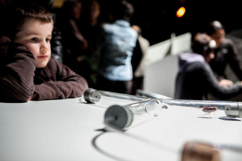 Un petit garçon observe un cafard qui se déplace dans un tube en plexiglass.