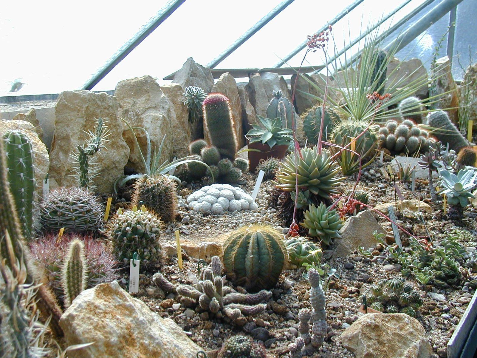 Cactus et plantes du d sert l 39 actu de l 39 universit de franche comt - Petit jardin public lettres besancon ...