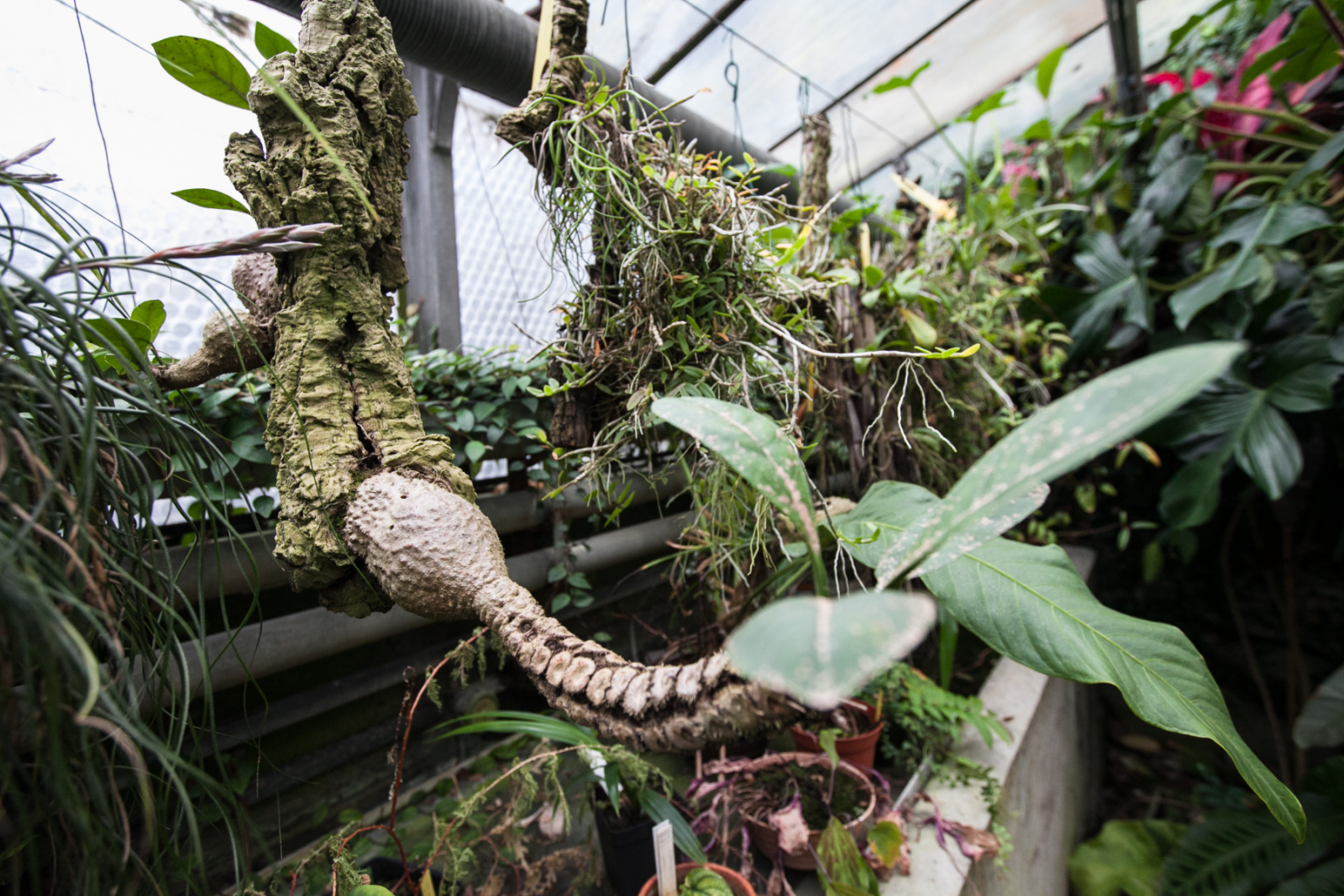 Amis ennemis du jardinier ou du promeneur l 39 actu de l for Amis du jardin botanique