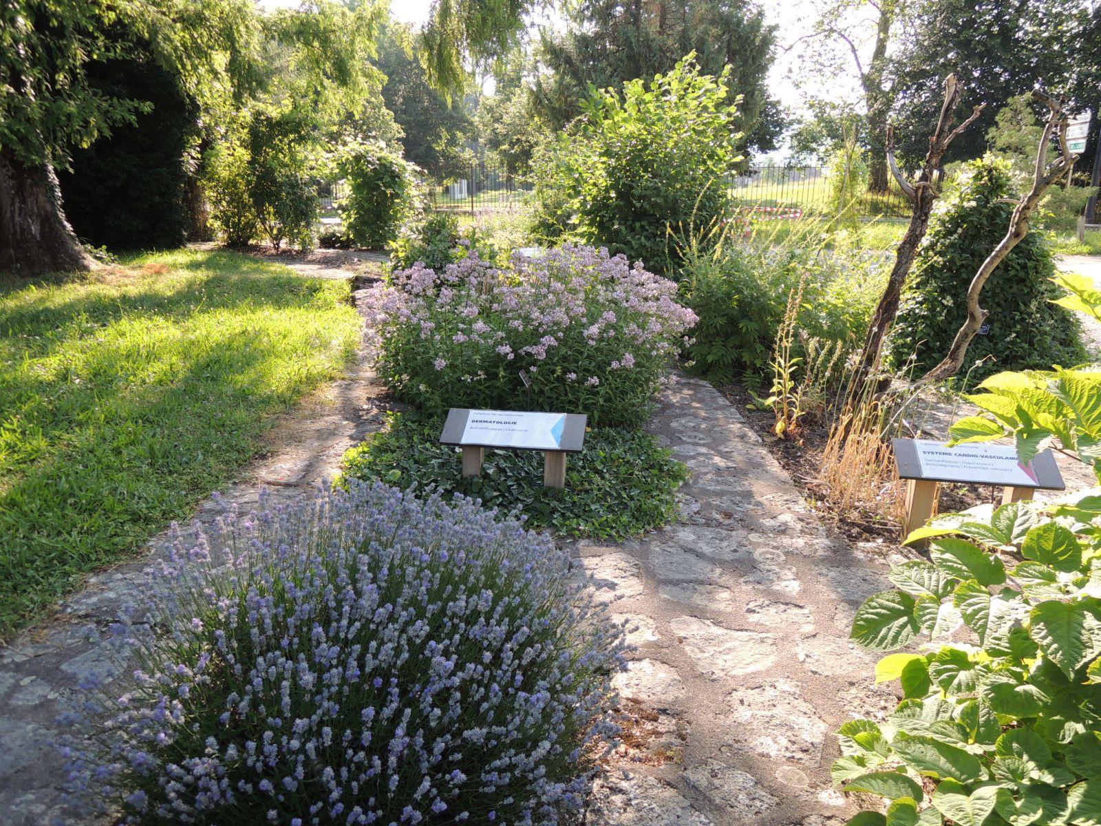 Les plantes m dicinales de l 39 herboriste au pharmacien for Jardin botanique 78
