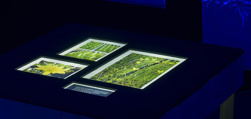 L'expo de la mort qui tue Jardin botanique