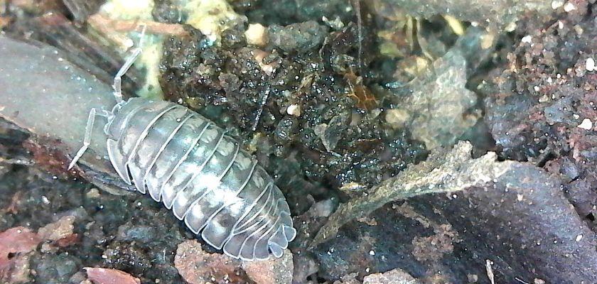 Micro-organismes du sol