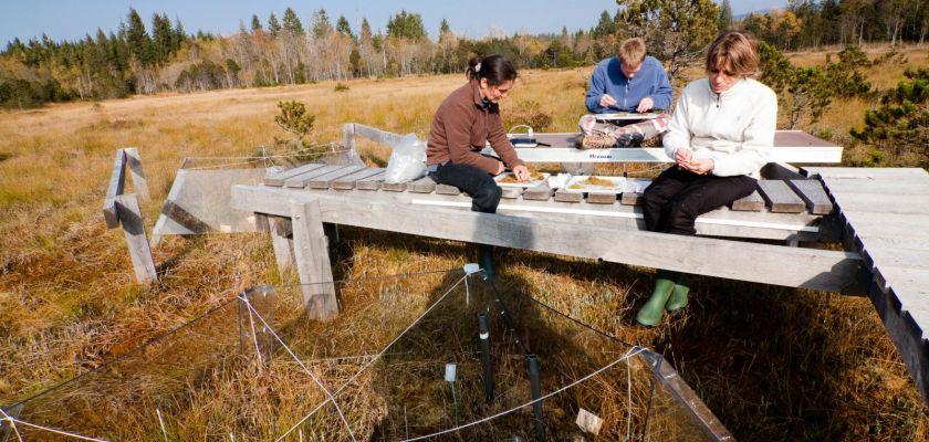 trois chercheurs sur un ponton sur la tourbière de frasne