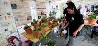 Cité des plantes