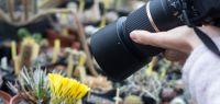 photo de plantes