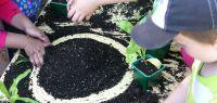 Des enfants apprennent à jardiner