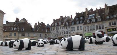 De nombreuses scultpures de panda place de la révolution à Besançon