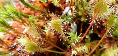 Attention les doigts! Plantes dangereuses