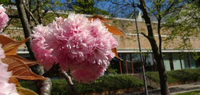 faune et flore sur le campus