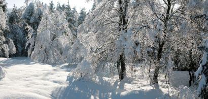 Des arbres sous la neige. Paysage de la vallée de la Brévine.