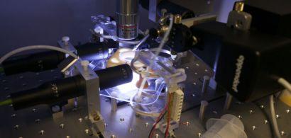 Un dispositif expérimental avec un microscope.