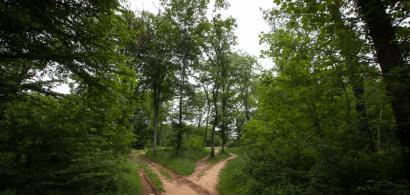 Vue d'un chemin dans la forêt de Chailluz
