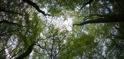 Forêt en contre-plongée