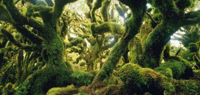 Panneau de l'exposition présentant une forêt