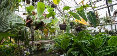 Intérieur des serres du Jardin botanique