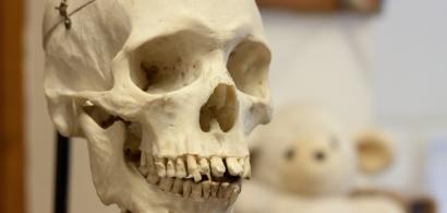 crâne en plastique