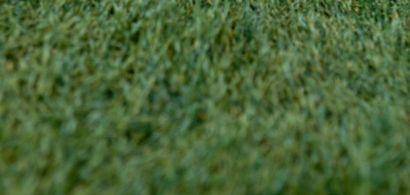 Balles de golf dans l'herbe