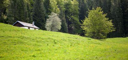 Clairière dans le Jura