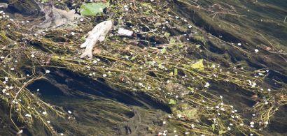Pollution du Doubs