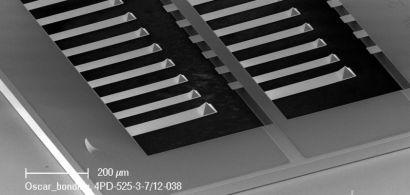 Image obtenue grâce au microscope