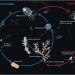 Cycle de vie de turritopsis
